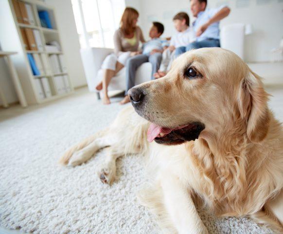 Confiança criar animais em condomínio